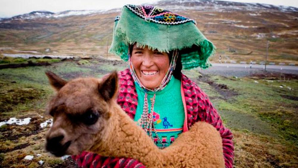 los-mejores-ejemplares-de-alpacas