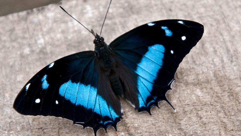 peru-el-pais-de-las-mariposas